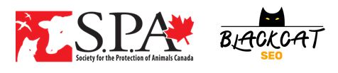 October: Month SPA Canada and Black Cat SEO Unite for Black Cats