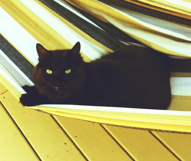 October: Month of the Fight Against the Discrimination of Black Cats