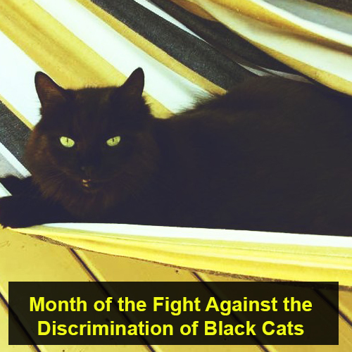 fight against discrimination of black cats