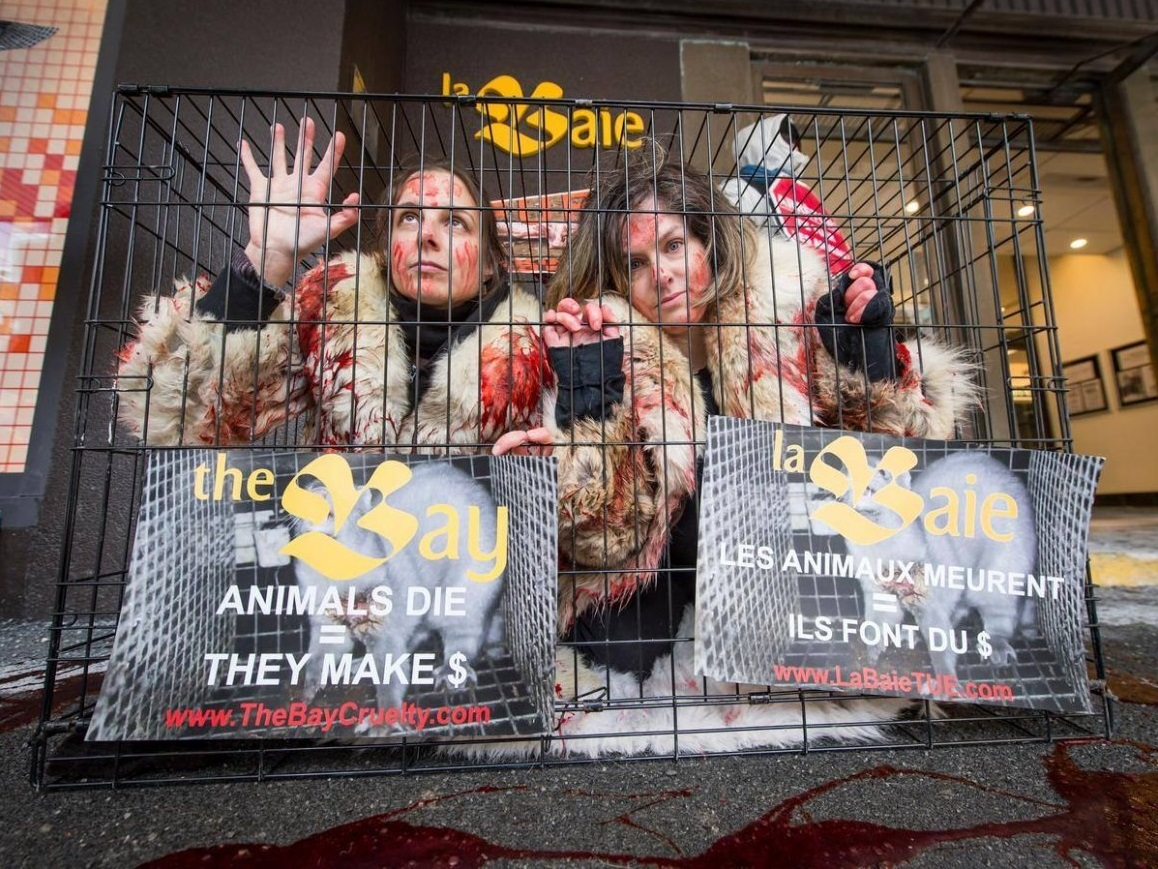 SPA Canada two members locked in a cage clad in bloody fur coats